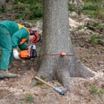 Risk Assessment & Method Statement for Tree Work